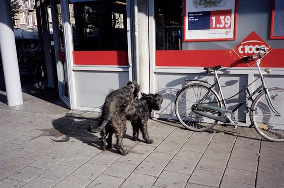http://dennisduijnhouwer.com/files/gimgs/33_dogs02b.jpg