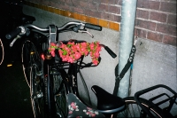 126_fake-flower-fiets01c.jpg