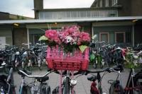 126_fake-plant-bike01c.jpg