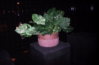 57_57fake-plant-supper01b.jpg