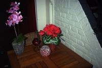 57_fake-flower-spui02b.jpg