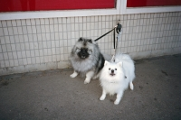 61_dogs-finland01a.jpg