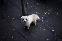 76_dog-ah01c.jpg