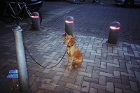 76_doggie-ah02b.jpg