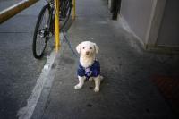 76_doggie-nyc01b.jpg