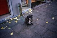 76_doggie-nyc05b.jpg