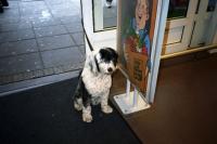 76_doggie-wibaut02b.jpg