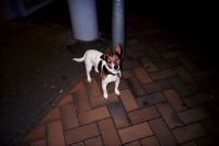 76_doggie01b.jpg