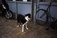 76_doggie01b_v2.jpg