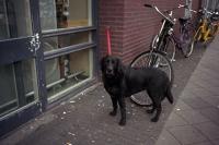 76_doggie01b_v4.jpg
