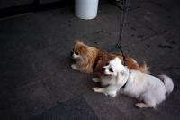 76_doggies01b.jpg