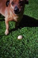93_93dog-egg01b.jpg